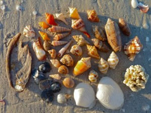 Our seashells