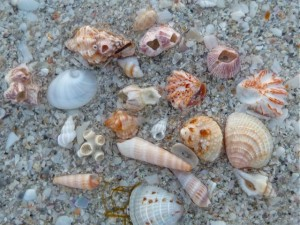 Sanibel lighthouse miniature shells
