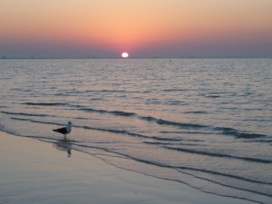 Sanibel sunrise with gull