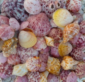 Easter Seashells