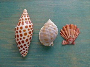 Elite Three Seashells