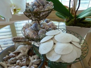 Sand Dollar display