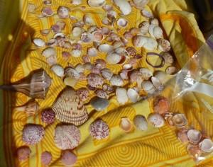 blanket shells
