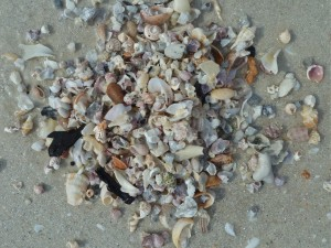 miniature seashell pile virtual shelling