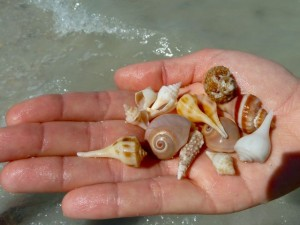 scoop of seashells