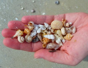 seashells handful