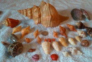 shells found april 6