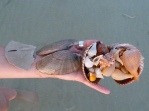 Katie's Sanibel shells