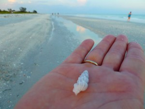 Wentletrap seashell