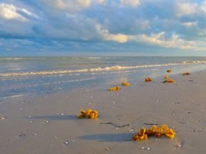 egg casings on Sanibel