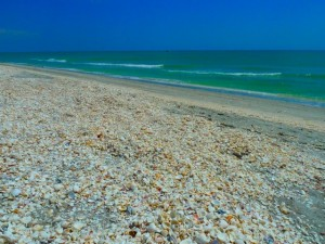 shells on Sanibel by bayou