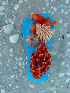 spongy shoe