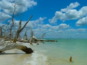 Cayo Coast photo