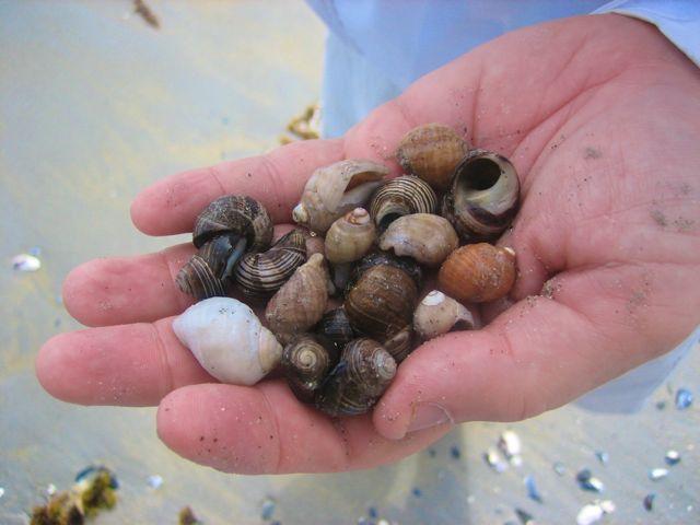 Nova Scotia shells
