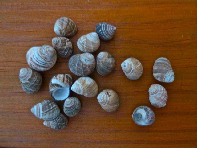Nova Scotia Seashells