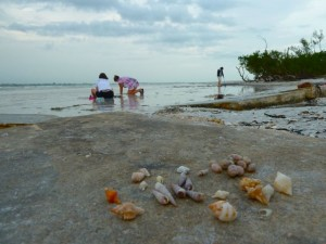 Sanibel shell scene
