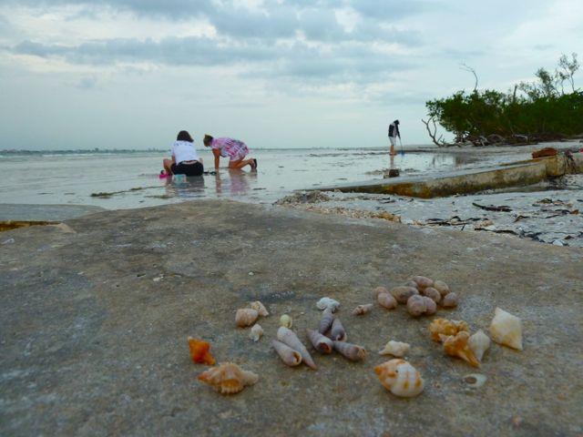 Sanibel shell scene