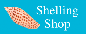 Shelling shop junonia