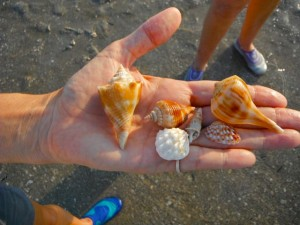 Susie's shells