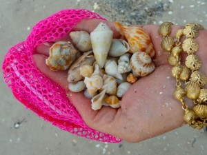 Nutmeg seashells and Bracelet