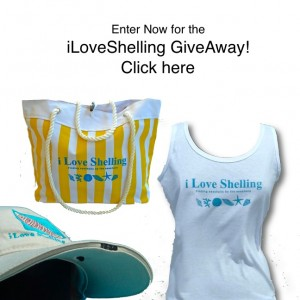 iLoveShelling GiveAway