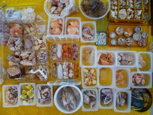 organizing seashells