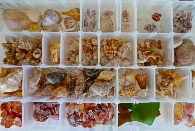Organize Shells I Love Shelling