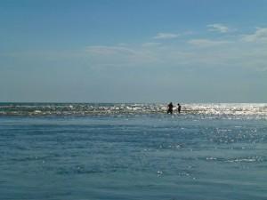 Shellers in gulf