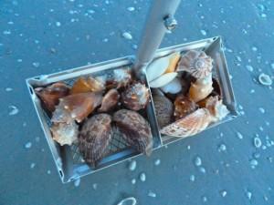 seashell shell rake