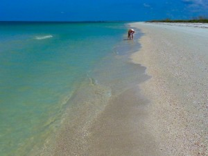 Honeymoon Island Florida beach