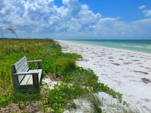 Honeymoon Island bench