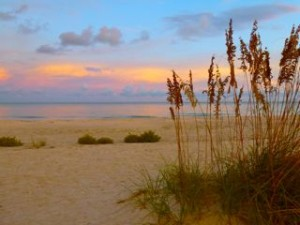 Reasons why I love the beach- sea oats