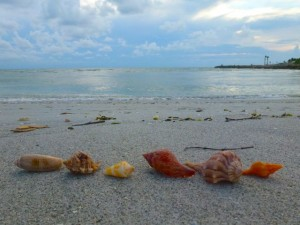 Sanibel six seashells bp