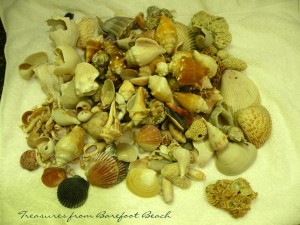 kelly disney shells
