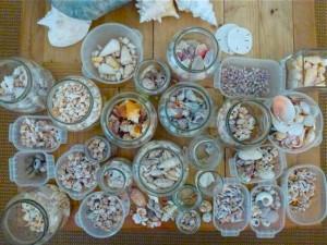 organizing shells