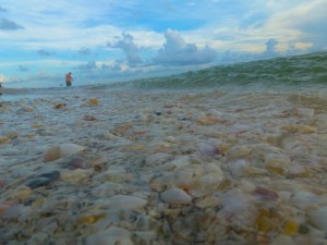 sanibel seashells in surf bp