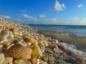 shells at Blind Pass