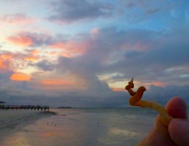 Sanibel Seashell Update: Blind Pass to Lighthouse Beach