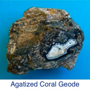 Agatized Coral Geode