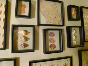 Framed seashell display dmm