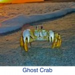 Ghost Crab Beach ID