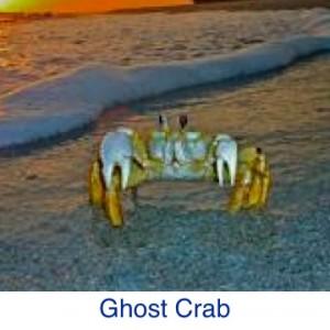 Ghost Crab Beach ID