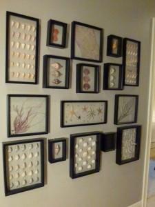 Hallway framed seashells dmm