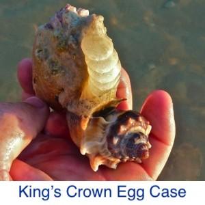 Kings Crown Egg case