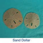 Sand Dollar Beach Treasure ID