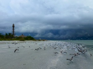 Sanibel lighthouse with birds