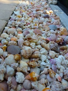 row of seashells dmm