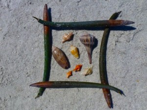 sanibel 6 mangrove seed