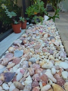 seashells by pool dmm