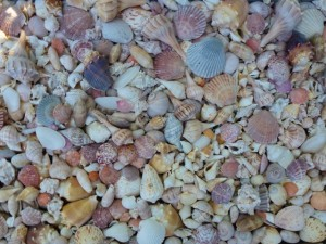 seashells in the yard
